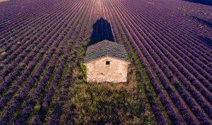 Young Living Lavendelfarm in Simiane La Rotonde Frankreich Provence