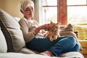 AROMAREICH Blog Ätherische Öle für Haustiere Katze