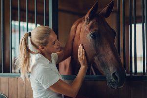 AROMAREICH Blog Ätherische Öle für Haustiere Pferde